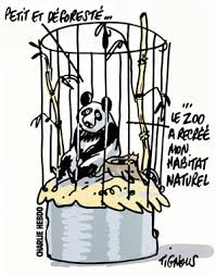 Charlie-Hebdo-Panda-Tignous
